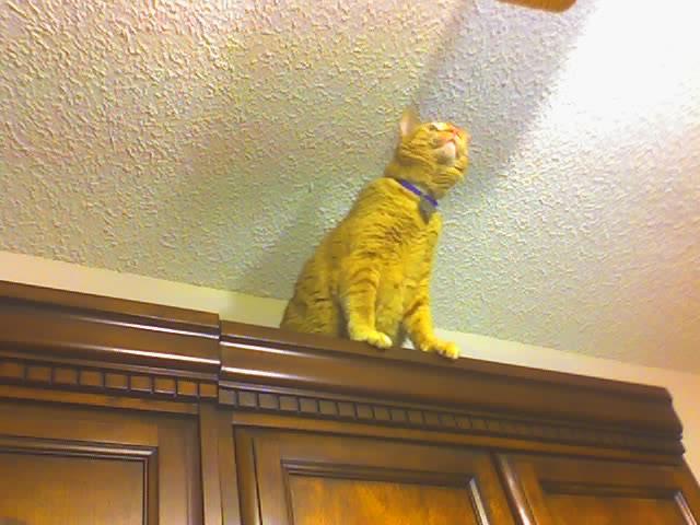 Tiger Climbing